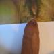 sesso Aosta