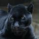 Pantherpride2018
