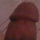 cabrera La cabrera