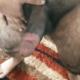 dick4holes