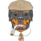 Rottweiler_