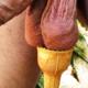 bullporco