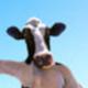 cowcows