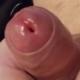 Pudelbear