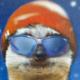 meerkat50