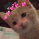 Aman_chaudhary00