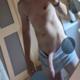 BritishBull22