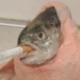 PickledA1Sauce