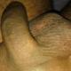 Sexmad8888