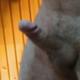 Lajcsi68