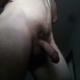 volim_velike_guzice