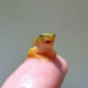 PAWGfrog