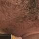 HairyHulk36