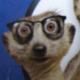 littleBiGhorn_y