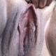 Fapgud