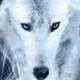Nightwolf1944
