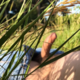 lasombra_z Bryan_agudeloo