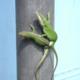 lizardlove