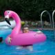 turtle_man