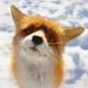 Fox_N_Frogg