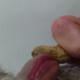 PeanutLicker