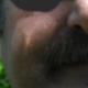 OscarMa31478459 Ian