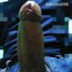 altruitre098
