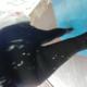 legginglover69666