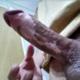 Alejandroo23